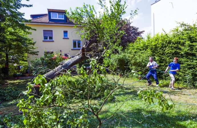 Tree Care Services-Arlington TX Professional Landscapers & Outdoor Living Designs-We offer Landscape Design, Outdoor Patios & Pergolas, Outdoor Living Spaces, Stonescapes, Residential & Commercial Landscaping, Irrigation Installation & Repairs, Drainage Systems, Landscape Lighting, Outdoor Living Spaces, Tree Service, Lawn Service, and more.